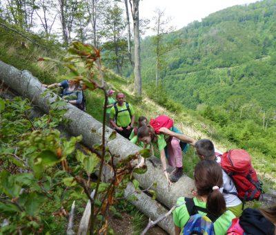 Planinarenje Sljeme, 26.5.2019.